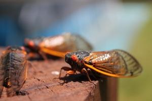 CicadaPost-04