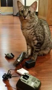 Cat by broken phone