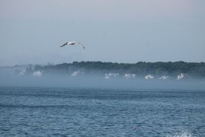 Seagul in the mist