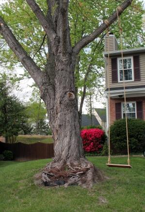 boxed tree