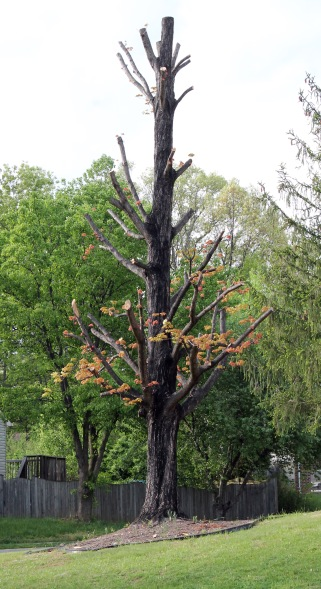 burned tree